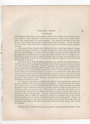 Whippet Dog Original Article 1881 Vero Shaw's Book Of The Dog  • 10£