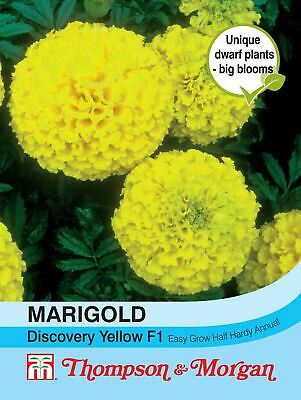 Thompson & Morgan - Marigold Discovery Yellow F1 Hybrid (African) - 20 Seed • 2.99£
