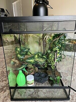 $119 • Buy Tropical Chameleon Cage 30 GAL + All Accessories With Huge Male Jackson