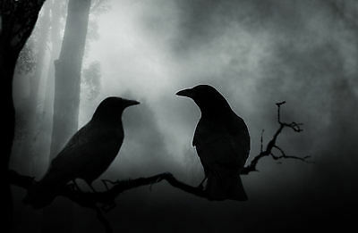 £7.95 • Buy Framed Print - Gothic Crows / Ravens Standing In A Tree (Birds Picture Poster)