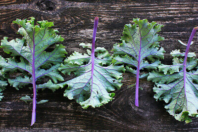 £1.89 • Buy 50 Red Russian Kale Seeds - Frost Hardy
