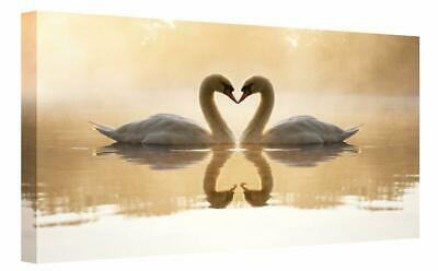 £29.99 • Buy Romantic Loveheart Swans Canvas Print Wall Art.  Picture Framed Ready To Hang