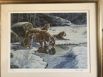 Stephen Gayford Tiger Print, Limited Edition, Signed 1678/2500 • 29.95£
