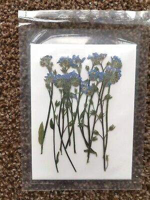 12 Pieces Real Pressed Forget Me Not With Stem, Natural Flowers With Leaves • 5.99£