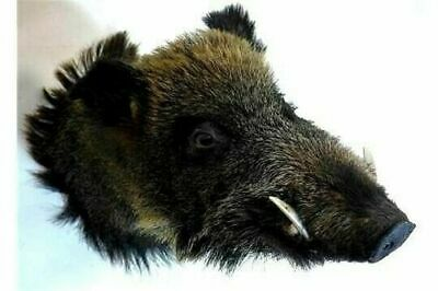 6 X Victorian Taxidermy Birds Boar Rabbits In Glass Cases For A Nhs Nurses Fund  • 495£