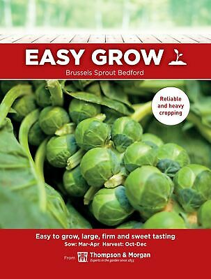 £1.59 • Buy Thompson & Morgan Easygrow - Brussels Sprout Bedford - 75 Seeds