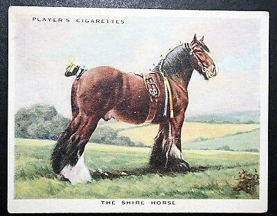 SHIRE HORSE   Draught And Cart Horse  Superb Vintage Card  • 3.99£