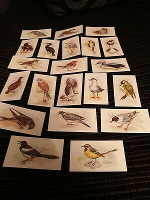 John Player Cigarette Cards Grandee British Birds Collection X 21 Cards  • 0.99£