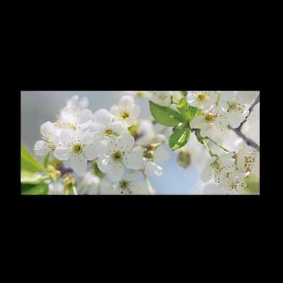 Ikea Bjorksta, Cherry Blossom, Wall Picture, Large Canvas 140 X 56cm New In Tube • 15£