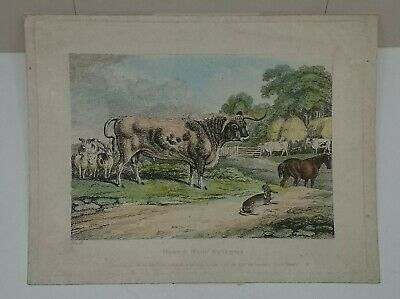 £70.79 • Buy Samuel Howitt Original Etching The Hare And Many Friends 1810 Orme's Animals Set