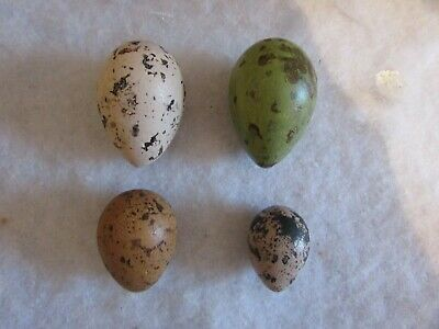 £8.50 • Buy Replica Selection Of Curlews  Long Billed/common/eurasian/stone Eggs By smudge