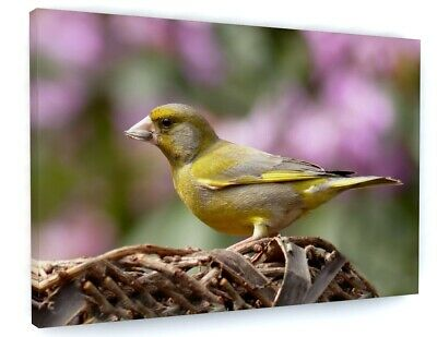 £19.05 • Buy Stunning Yellow Gold Finch Bird Canvas Picture Print Wall Art 6396