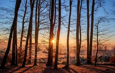 £5.73 • Buy Stunning Woodland Trees Sunset Canvas Picture Poster Unframed #2447