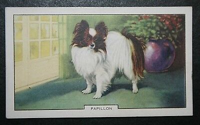 £3.99 • Buy Papillon Toy Dog      Butterfly Dog    Vintage 1938 Coloured Card  #  VGC