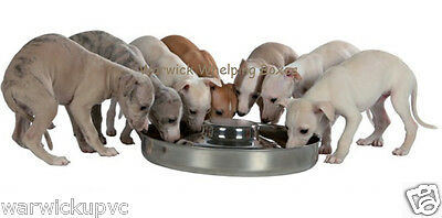 Puppy Saucer Weaning Feeding Bowl Stainless Steel Extra Large 15  / 38cm 4.0l /  • 19.99£