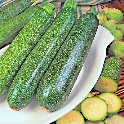 £1.09 • Buy Vegetable Courgette Green Bush 75 Seeds Zucchini / Marrow