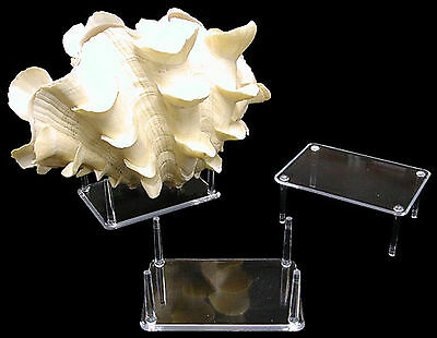 $5.79 • Buy 4 Prong Display Table Stand 2.5 X 3.5  For Seashells Clear Acrylic