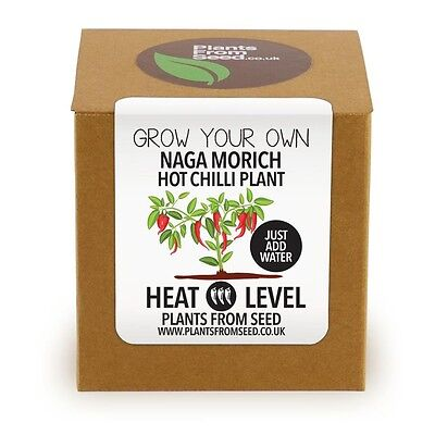 Plants From Seed - Grow Your Own Naga Morich Chilli Plant Kit • 8.99£