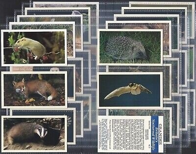 £1.99 • Buy Players Grandee-full Set- Britains Nocturnal Wildlife (t30 Cards) - Exc+++