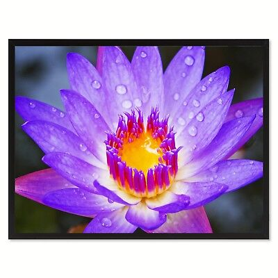 $ CDN5 • Buy 5pcs Purple Lotus Seeds Water Lily Fragrance Water Pond Plant In House & Outdoor