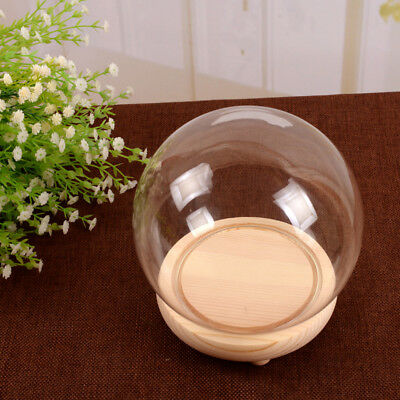 £10.74 • Buy Round Decorative Glass Dome With Wooden Base Cloche Bell Jar LED Light Display