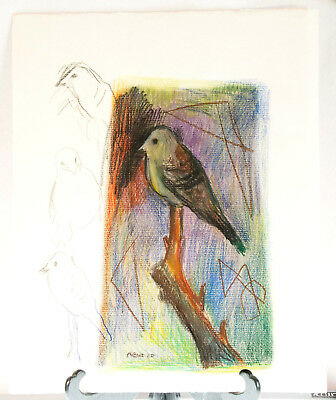 Oil Pastel Bird Drawing, Colorful Bird W/ Pencil Sketches, 19  X 15.5  Signed  • 27.53£
