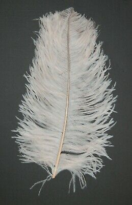 $14.99 • Buy 2 PCs OSTRICH PLUMES 8 -18  FEATHERS COLOR : BONE For Hats/Bridal