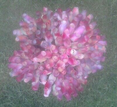 120 Wooden Rainbow Roses  • 50£