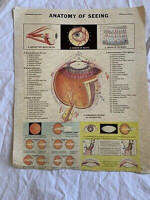 $16.19 • Buy THE ANATOMY OF Seeing Vintage Medical Science Wall Chart Poster