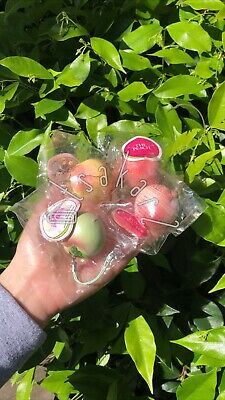 AU148.54 • Buy X4 Super Rare Vintage Mini Ibloom Peaches Bundle!!!
