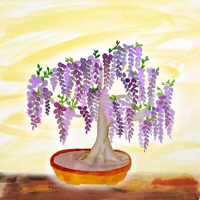 Purple Chinese Wisteria Sinensis Seeds For Bonsai Or Garden Plant - 10 Seeds • 3.72£