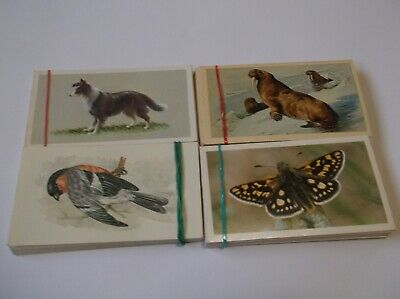 Grandee  Cigar  Cards   Birds  Dogs Butterflies And Mammals • 4.99£