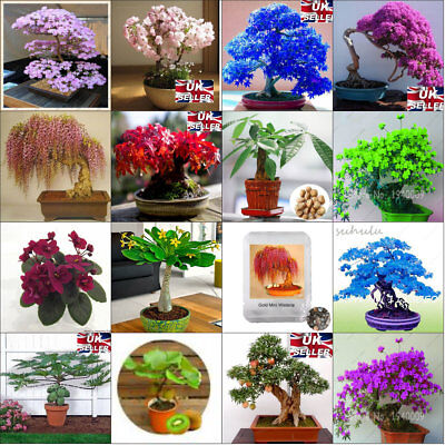 SEEDS Collection Bonsai Tree Colourful Unique Rare Indoor Plants Potted Japanese • 2.99£