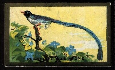 $2.80 • Buy Tobacco Card, Cavanders, FEATHERED FRIENDS, 1926, Red Billed Blue Magpie, #6