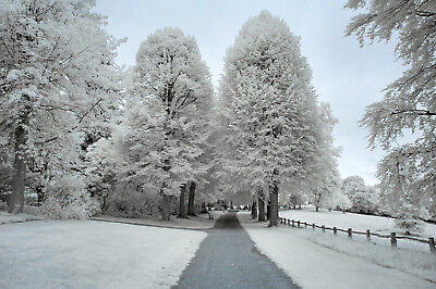 Nikon D70s Infrared Converted 720nm Infrared Camera  (Body Only) Ir720nm • 109£