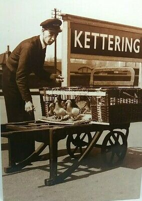 £3.75 • Buy New Modern Postcard Porter With Basket Of Pigeons At Kettering Railway Station
