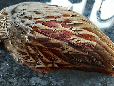 Taxidermy Pheasant Wing For Fascinator Pe Home Decor • 8.99£