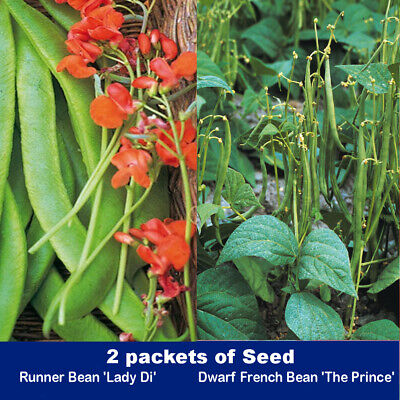 RUNNER BEAN SEEDS - Lady Di Seeds 30 Pack And French Beans Dwarf  The Prince 30  • 3.25£