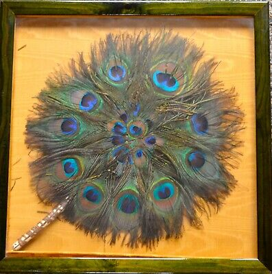 Framed Vintage Peacock Feather Fan In The Round • 50£
