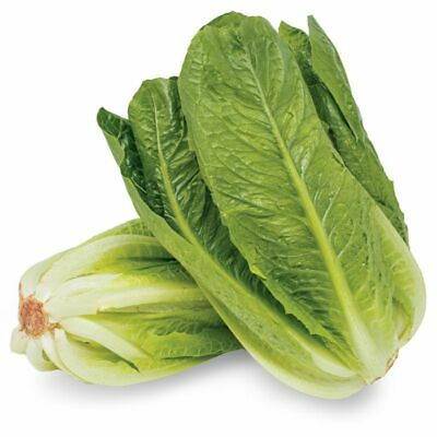 £1.99 • Buy LETTUCE 450 SEEDS Romaine Cos Fresh Seeds  FAST UK DISPATCH✅