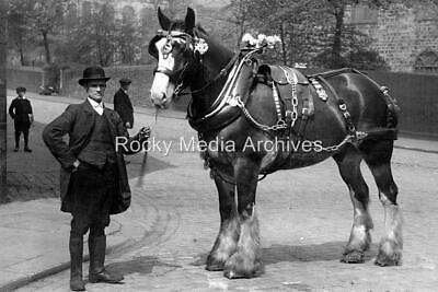 Afk-29 Social History, Heavy/Shire Horse In Harness, Burnley, Lancashire. Photo • 3.25£