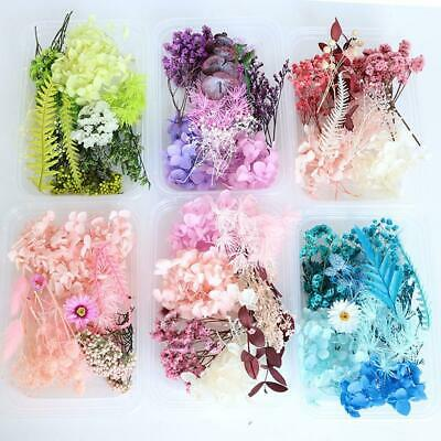 AU4.96 • Buy Real Dried Flowers Box Pressed Leaves For Epoxys Resins Jewelry Making