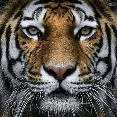 AU16.99 • Buy 5D Full Drill Diamond Painting Cross Stitch Kits Embroidery Tiger Head Art Decor