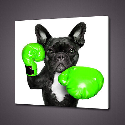 £19.99 • Buy French Bulldog With Green Boxing Gloves Funky Canvas Print Wall Art Picture