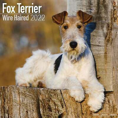 £13.99 • Buy Wire Haired Fox Terrier Dog 2022 Wall Calendar Hanging Planner 16 Month