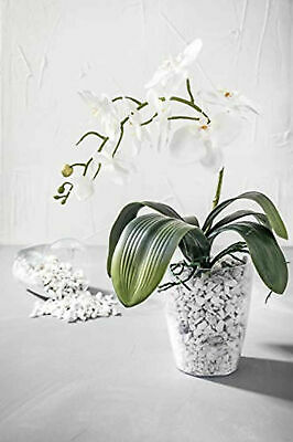 £3.77 • Buy ORCHID Flower Pot PLANT Plastic Clear  Garden Home 11 Cm FREE Post Greemotion
