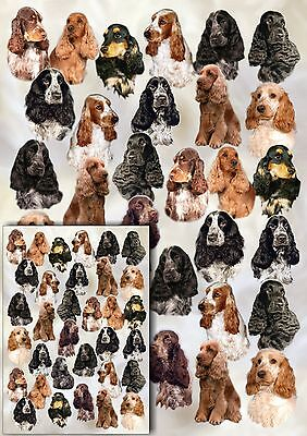 £2.75 • Buy Cocker Spaniel Dog Gift Wrapping Paper By Starprint - One Sheet Plus Gift Card