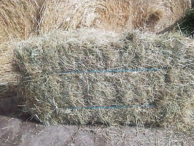 £3.80 • Buy Quality Small Bales  2020 Meadow Hay Pets Small  Animals Horses  No Ragwort