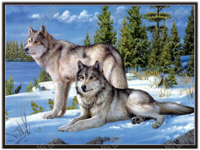 AU20.91 • Buy 3D Lenticular- 3 Images Of Wolves In One Poster - 12x16