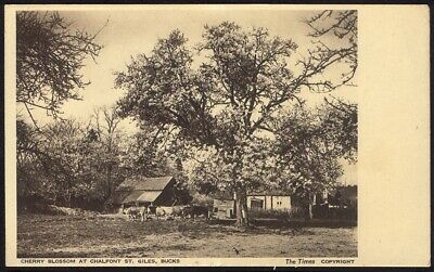 Cherry Blossom At Chalfont St Giles. Vintage Postcard. Free UK Postage • 3.95£